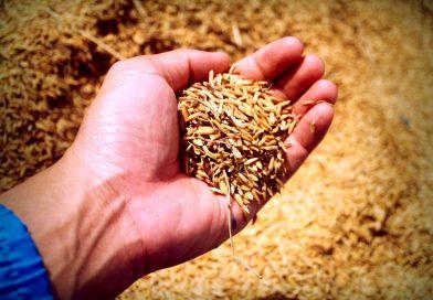 Impressive health benefits of Whole grains