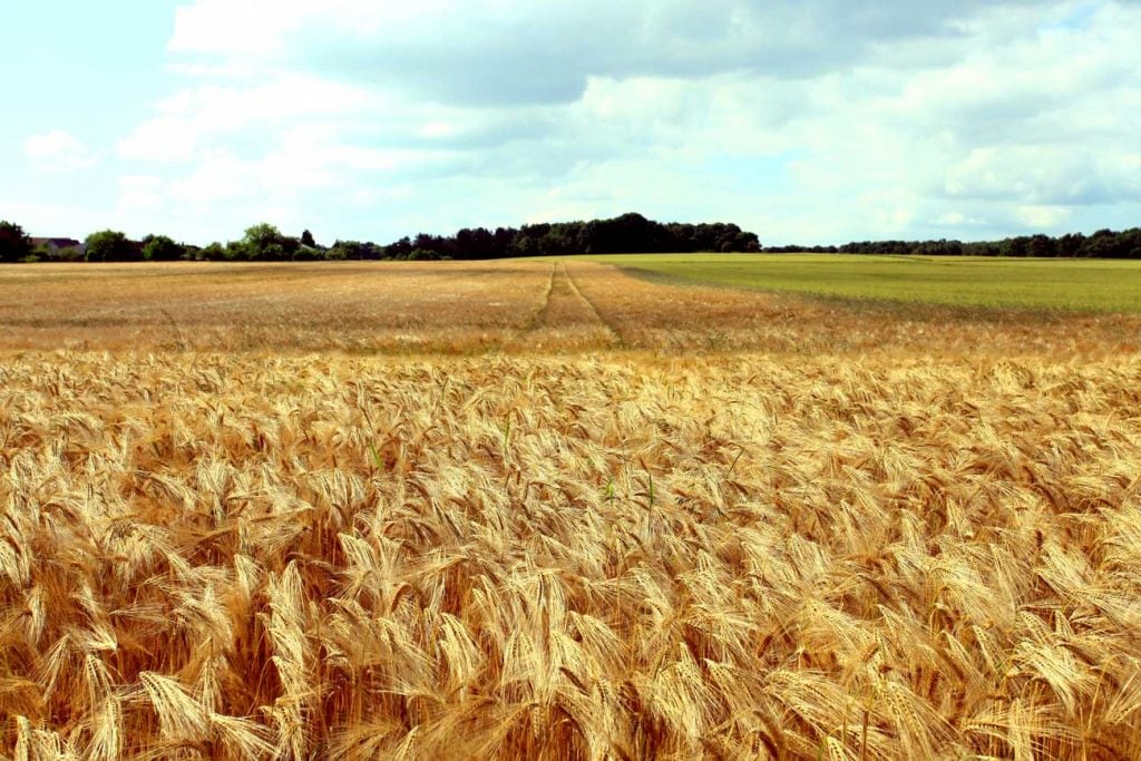 health benefits of Non-Grass Cereals