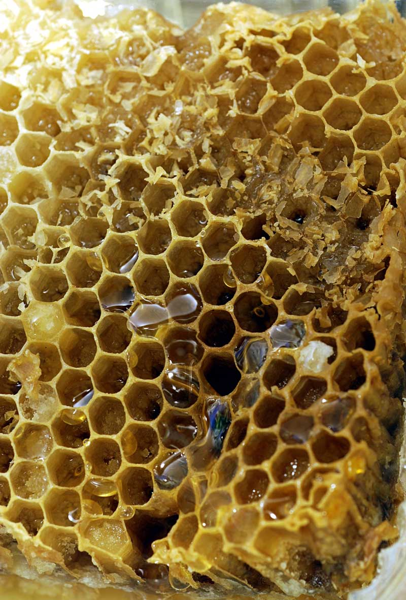 What Is Trypophobia And Is There A Cure I Need Medic