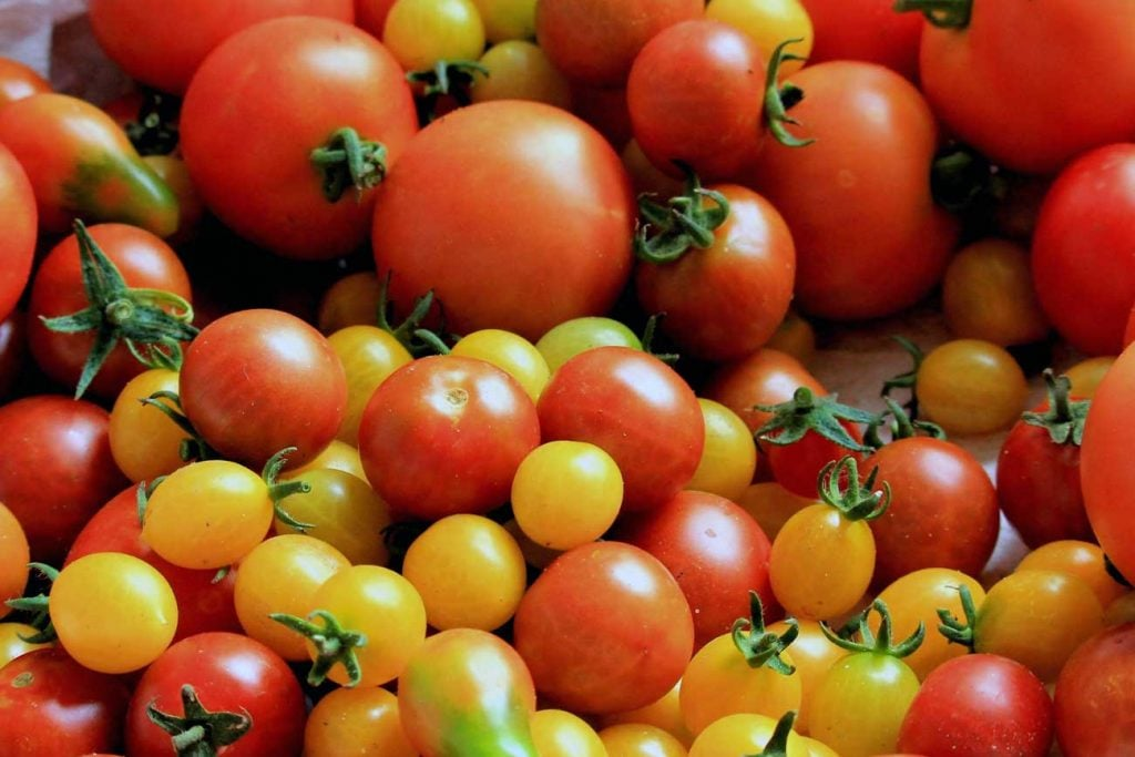 lifestyle with tomatoes