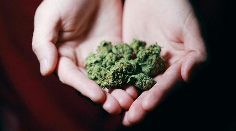 Can Cannabis Enhance Your Cognitive Power?